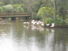 Tewkesbury 2012 079 []