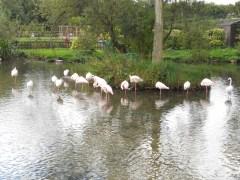 Tewkesbury 2012 086 []