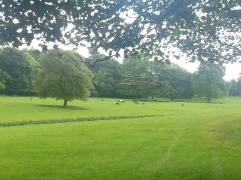 Deer in Raby's Parkland