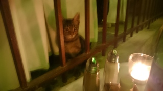 Cute kitten in To Pigadi taverna