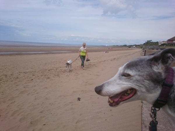 Walking the Dogs at Burnham on Sea