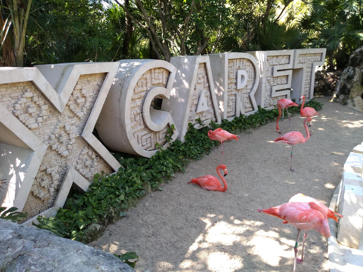 Flamingos at Xcaret Park