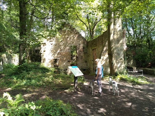 Mill ruins at Lumsdale Falls